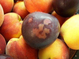 plum-smiley