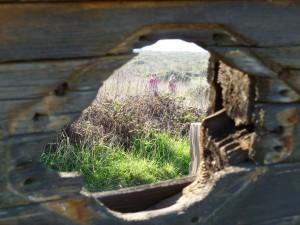porthole-smiley1