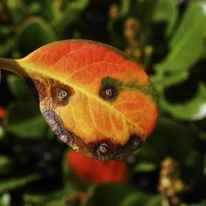 leaf-smiley