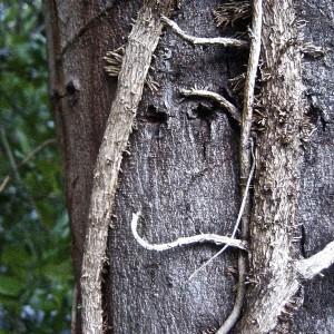 viney-tree-smiley-1